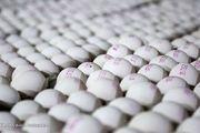 آینده روشنی پیش روی تولید مرغ و تخم مرغ نیست