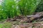 تصاویر: جنگلخواری در مازندران ادامه دارد