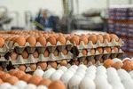 کسی از وضع تخم مرغ خبر دارد؟