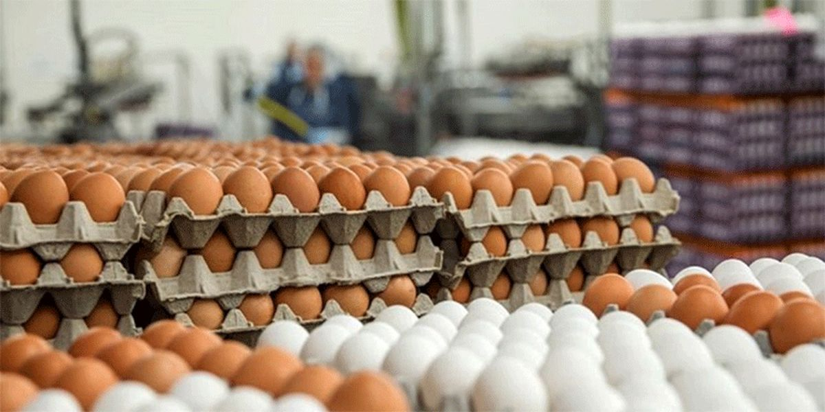 گرانی تخممرغ در مغازهها ارتباطی به مرغدار ندارد