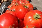 قیمت گوجهفرنگی به ۱۴ هزارتومان رسید