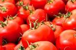 تعادل قیمت گوجه فرنگی ظرف ۲۰ روز آینده
