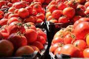 قیمت گوجه به ۴ هزار تومان میرسد