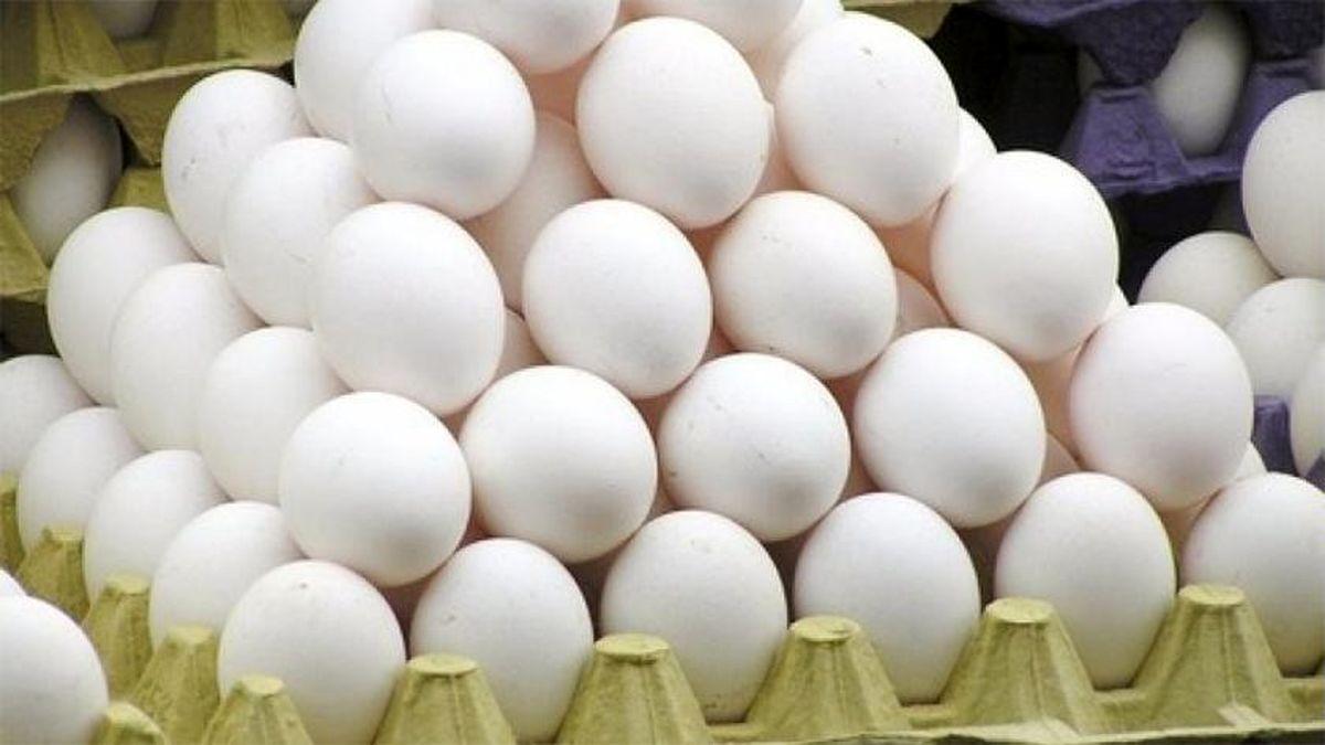 قیمت تخم مرغ درب مرغداری به کیلویی ١٥ تومان رسید