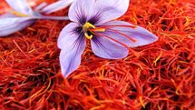 فیلم: سود اصلی تولید زعفران به جیب خارجیها