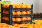 توزیع میوه شب عید جلوی درب مساجد