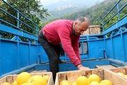سود ۲۰۰درصدی میوه در جیب دلالان و واسطهها