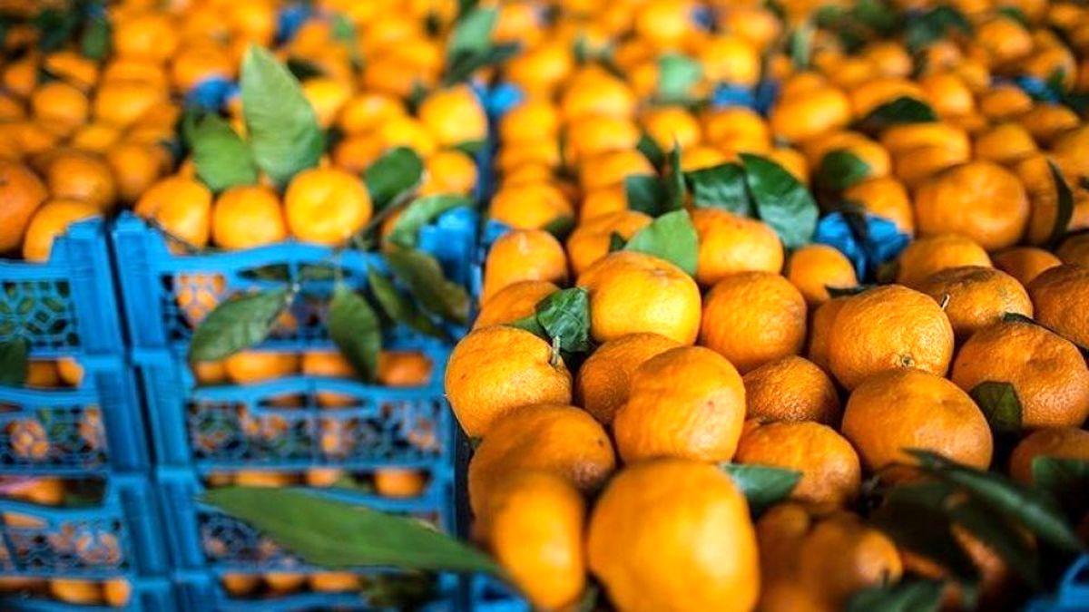 عجیب ولی واقعی؛ نارنگی ۵۵ هزار تومان