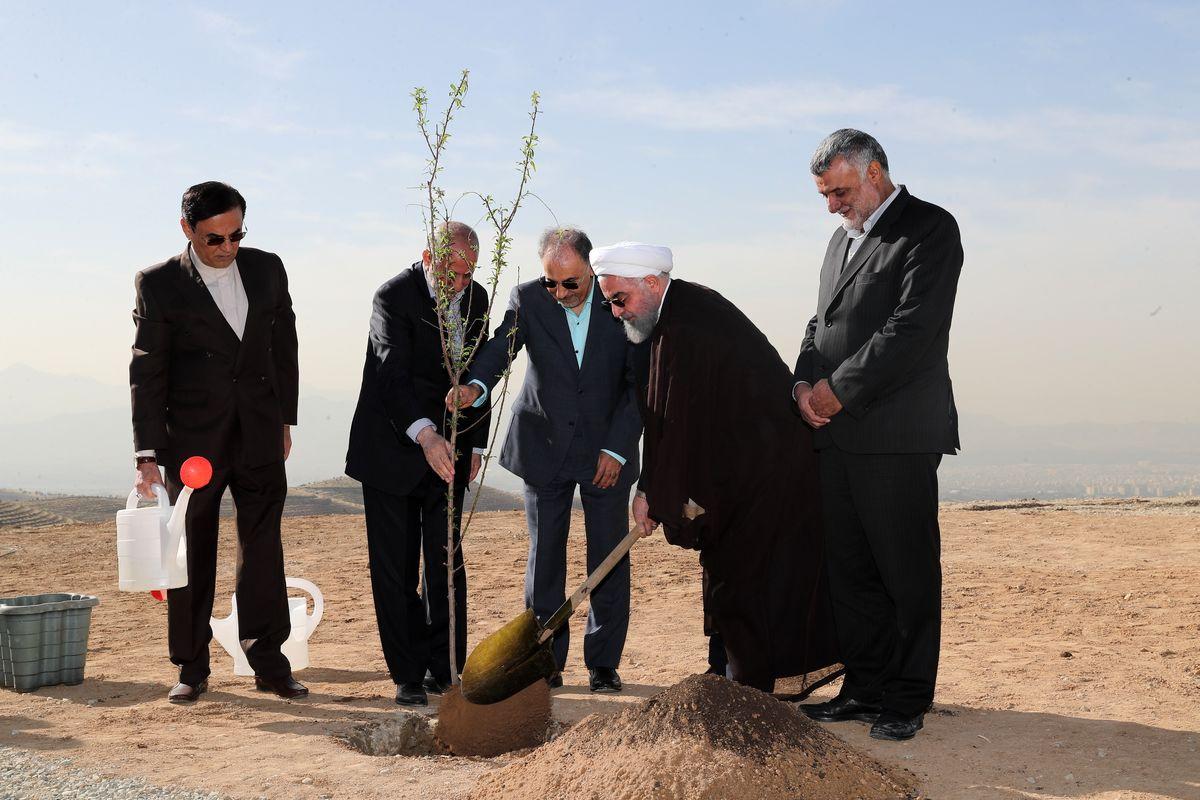 یک روز درختکاری، 364 روز تخریب